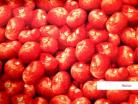 Tomatoes 1/4yd